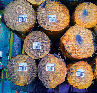 Timber Forestry Tag