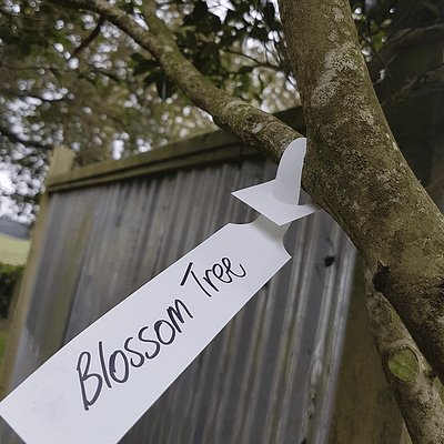 Tree Looparound