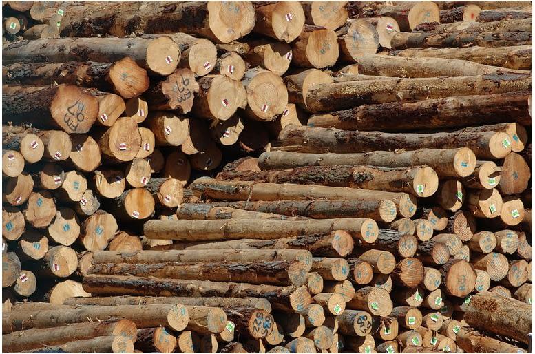 lyttleton logs